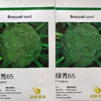 青花菜种子 绿秀65天秋季青梗松花菜种子花球松散绿梗有机菜花 周正 鲜绿