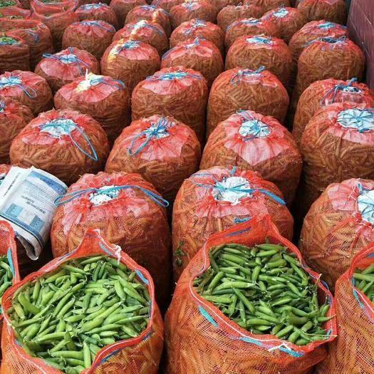 老河口市 中豌九號豌豆,顆粒飽滿,價格合理,貨源充足