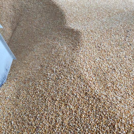平南縣玉米干糧 優質東北玉米