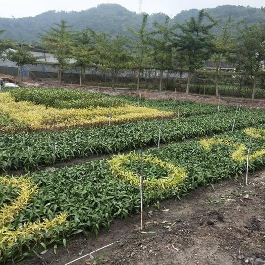 臺山市農場 省農業示范基地出租