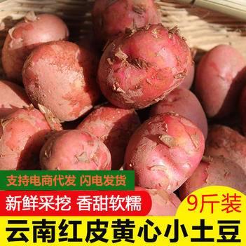 红土豆  农家自种9斤新鲜蔬菜红皮土豆黄心土豆马铃薯5斤包邮马铃薯