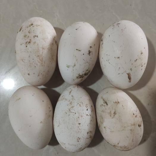 昌樂縣鮮鵝蛋 食用 散裝
