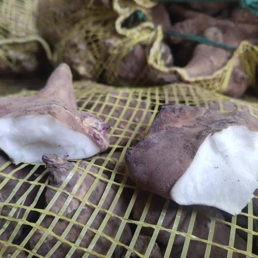 深州市 家庭农场种的洋姜。