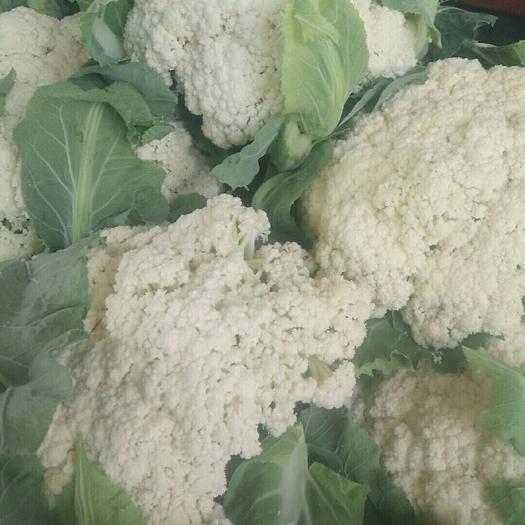 新野县有机花菜 白面青梗的有机花,质量杠杠的,大掉价了。另西葫芦,莴笋货多多