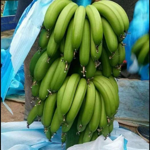 徐闻县巴西香蕉 七成熟