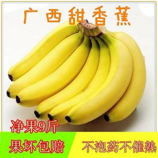 南宁 广西高山甜香蕉9斤包邮威廉斯香蕉巴西香蕉非红香蕉芭蕉米蕉粉蕉