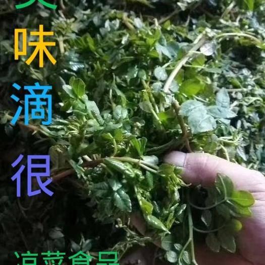 陇南 大红袍伏椒(花椒芽 )美味凉菜食品