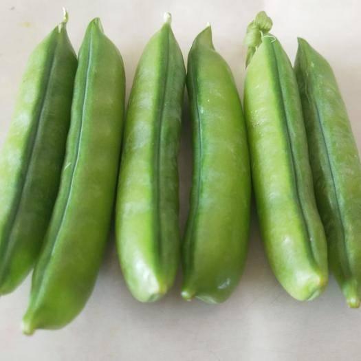 泌陽縣 新鮮豌豆莢,產地直發,可代購代發,貨源充足