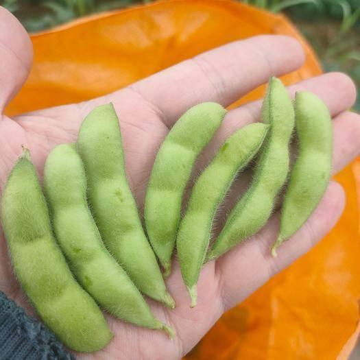 博白縣 綠寶石毛豆,顆粒飽滿,顏色靚