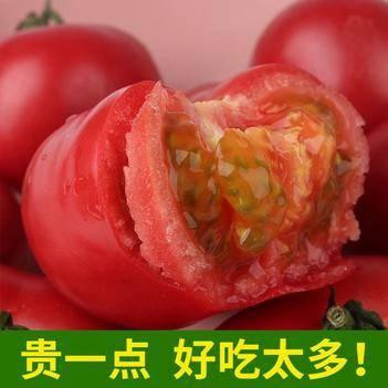 【破损包赔】西红柿新鲜蔬菜番茄水果自然熟沙瓤子3斤5斤