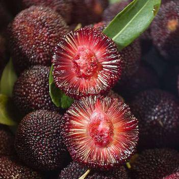 【一件代发】现摘新鲜东魁杨梅当季新鲜水果孕妇时令水果泡酒杨梅