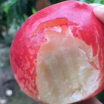 陕西水蜜桃 春雪水蜜桃4.8-5斤12-16个 新鲜现摘桃