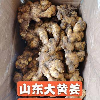 原产地直供山东大黄姜精品生姜平台交易坏烂包赔全国发货