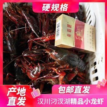 刁汊湖小龙虾 批发硬中红,中青4-6.2钱