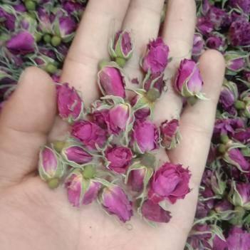 平阴玫瑰花冠茶 玫瑰花
