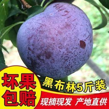 当季现摘陕西黑布林李子甜糯多汁农家新鲜水果黑总统黑巨李