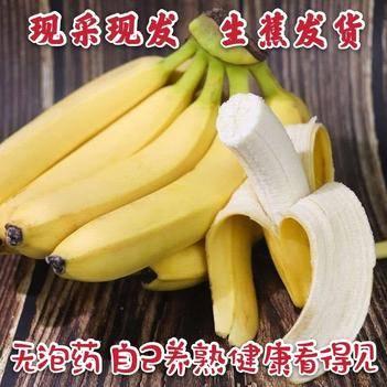 天宝香蕉绿皮自然熟非红皮香蕉现采现发生蕉发货净重9斤5斤3斤