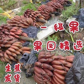红香蕉 福建红皮美人蕉9斤5斤3斤包邮现采现发生蕉发货无泡药更健康