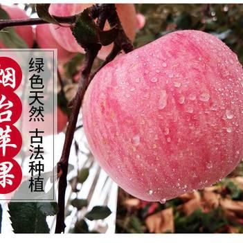 【脆甜多汁】山东烟台红富士苹果脆甜当季新水果10斤果园直发