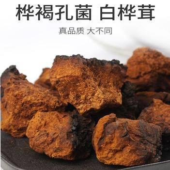 白桦茸  黄褐孔菌 俄罗斯进口 天然无添加 血糖高克星 包邮到家