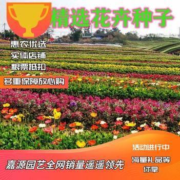野花组合种子  花种子多年生野花组合四季播种易活四季开花籽花卉种子孑庭院绿化