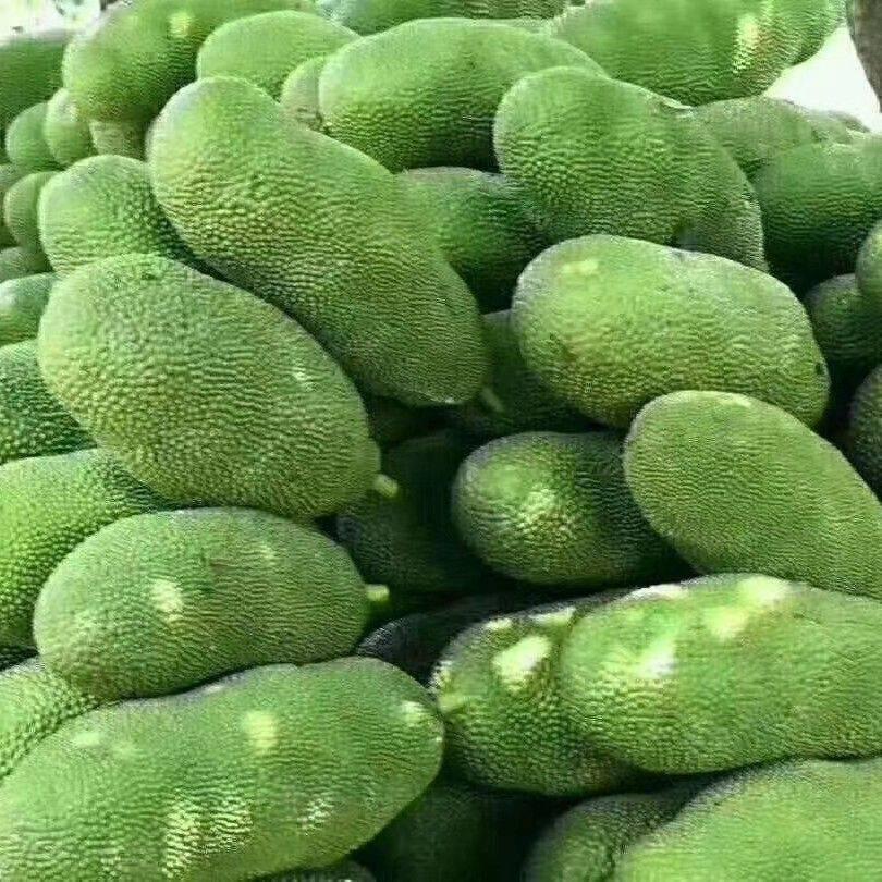 海南菠萝蜜  海南三亚菠萝蜜干包黄肉新鲜水果菠萝蜜15-30斤精选饱满通货
