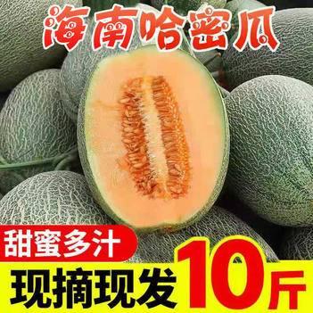 【香甜多汁】现摘海南哈密瓜10斤新鲜水果网纹瓜甜蜜瓜西州蜜瓜
