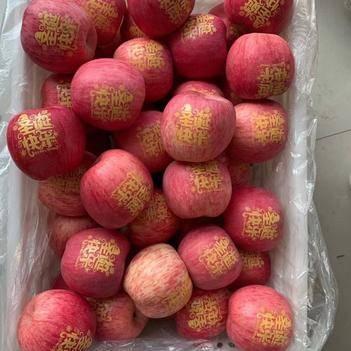 2020新果陕西洛川条红红富士脆甜苹果帖字苹果正宗红富士苹果