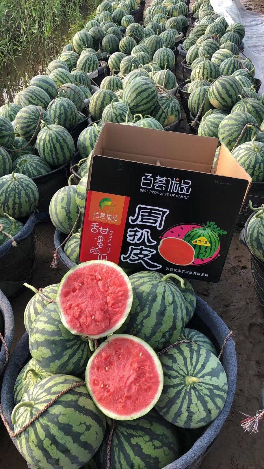 8424西瓜  美都无籽瓜,浙江人种的高品质西瓜,西双版纳产地直销
