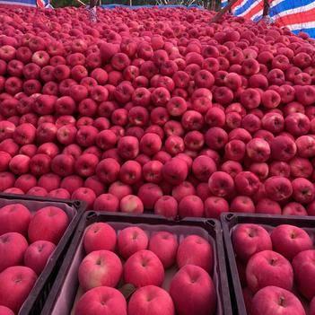 陕西红富士苹果脆甜口感现摘现发一件代发,大宗批发微商供货。