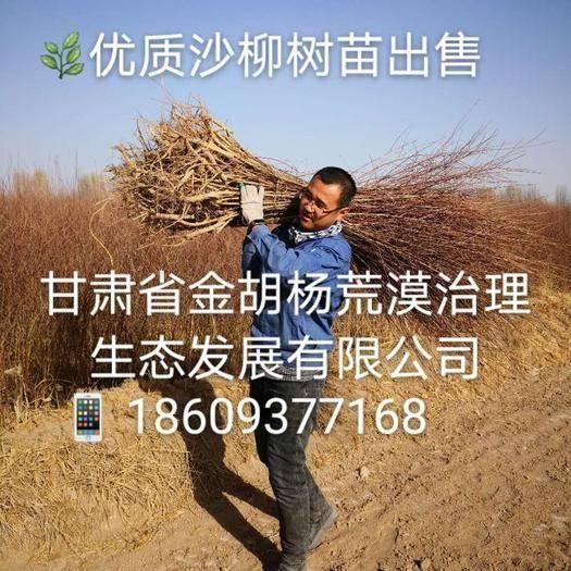 供應哪里有灌木沙柳樹苗出售賣的?價格多少錢?