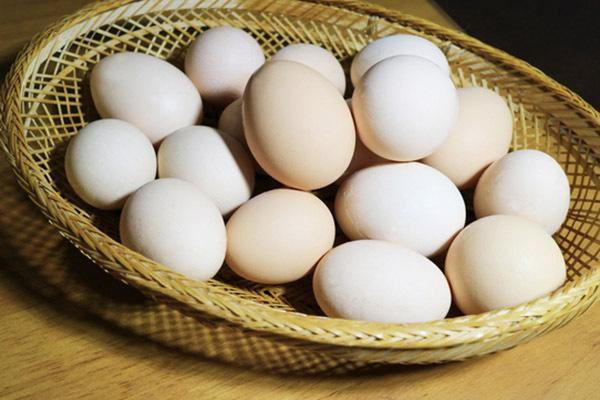 2020年8月份全国鸡蛋价格最新行情及走势