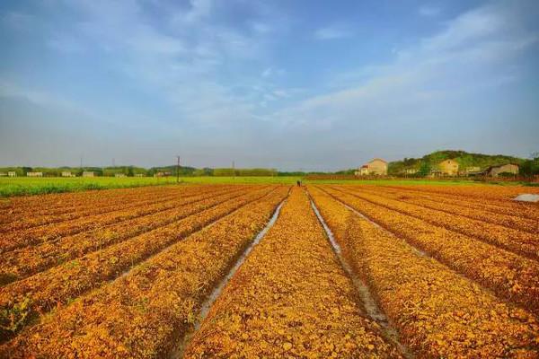 农村包地50亩地国家补助多少?附补助标准
