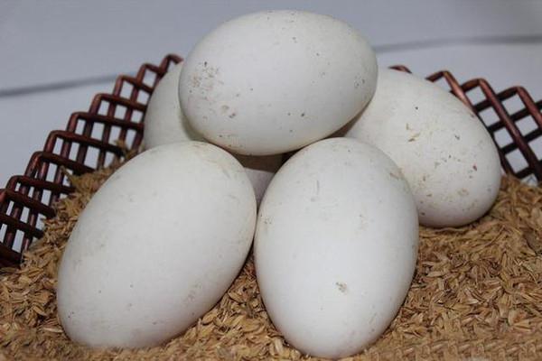 鹅蛋的功效与作用禁忌