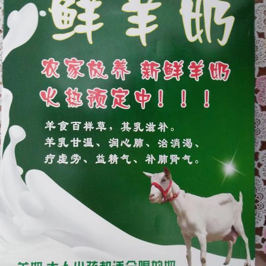 兰州永登县羊奶 1个月 冷藏存放