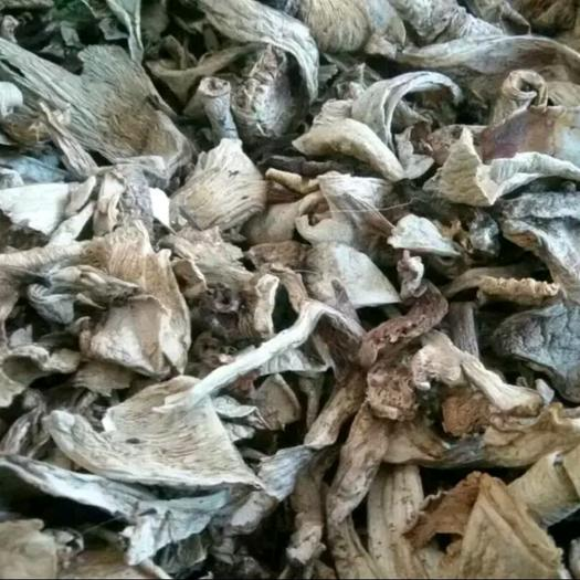 山西省吕梁市中阳县干银盘蘑菇 箱装 1年以上