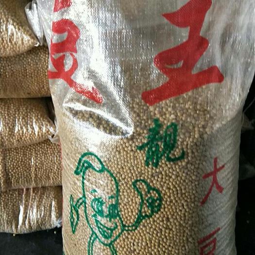 齐齐哈尔依安县 东北高蛋白大豆新粮己上市