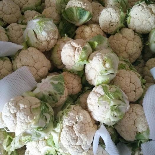 漢中洋縣白花菜花 1~2斤 緊密