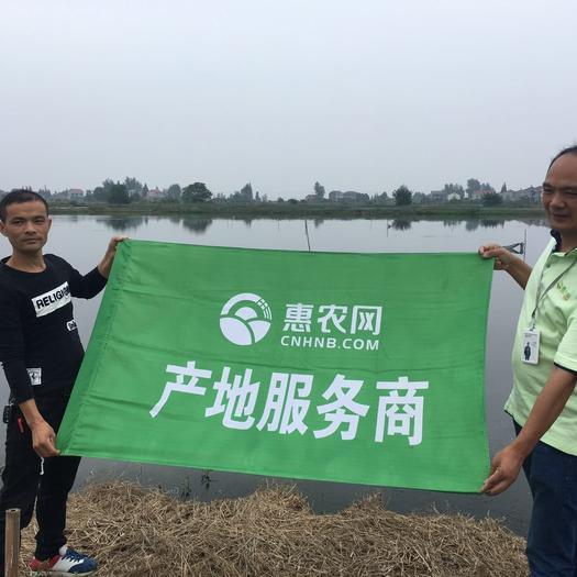监利县青壳小龙虾 产自湖区,底板干净,肉质Q弹。