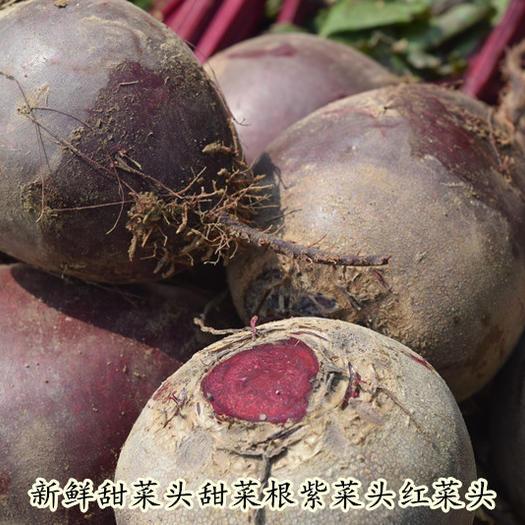 长春农安县红甜菜 15cm以上