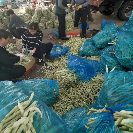 泰安宁阳县白玉豆