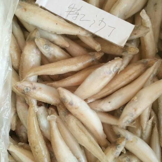 青岛黄岛区沙光鱼 正宗沙丁鱼