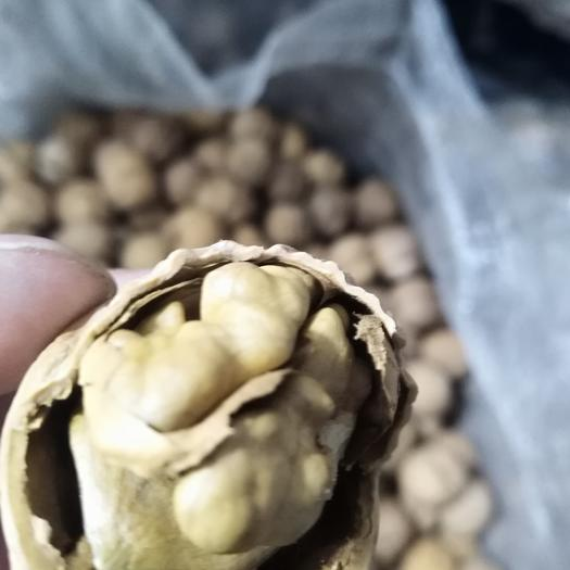忻州原平市薄皮核桃 果肉饱满2019年的新货产地批发大果