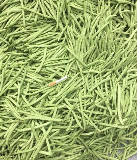 米易縣綠龍豆角 8~15cm以上