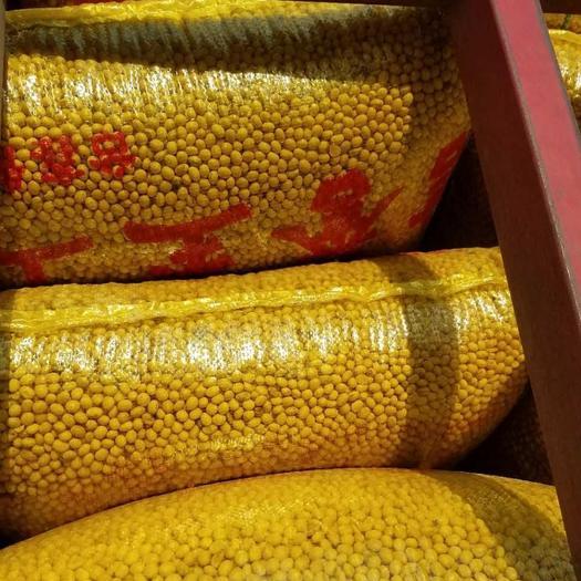 蚌埠五河县有机黄豆 生大豆 1等品