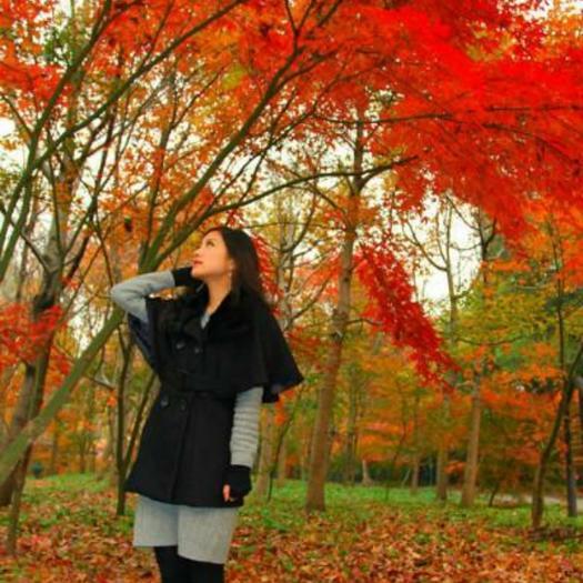 沭阳县枫树种子