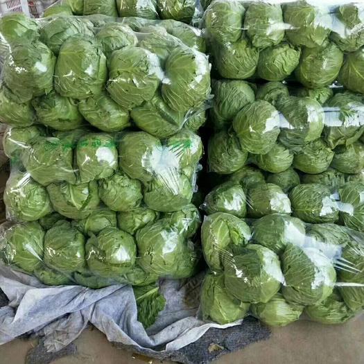 邯鄲永年區 邯鄲甘藍包菜,可供超市市場批發夏季,秋季量特大正在陸續上市中