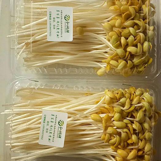 甘肃省兰州市七里河区大叶豆瓣菜