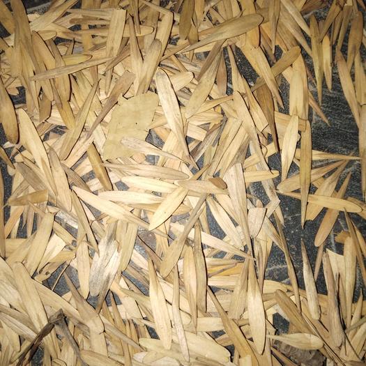 惠民县白蜡种子