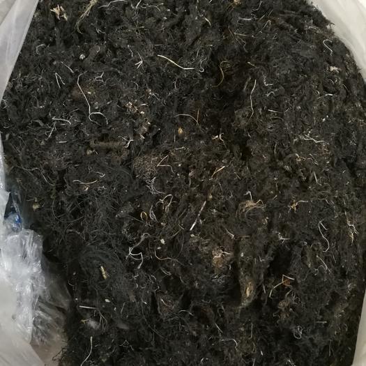 青海省海南藏族自治州共和县发菜 特级